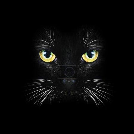 Black cat close up