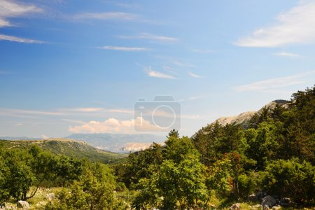 Green trees in mountains