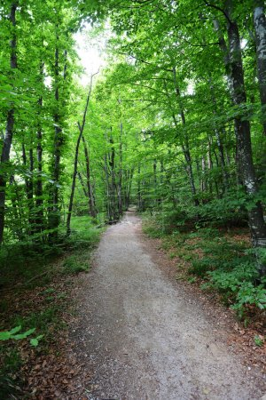 picturesque Footpath in forest