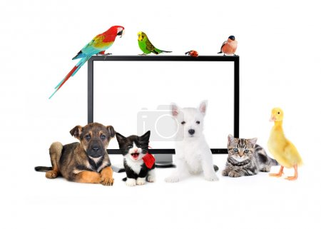 Cute animals near LCD Monitor