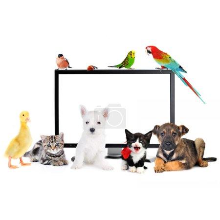 little animals near LCD Monitor