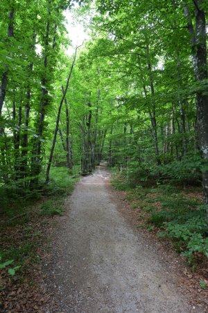 Foto de Vista del sendero en el bosque entre los árboles verdes brillantes - Imagen libre de derechos
