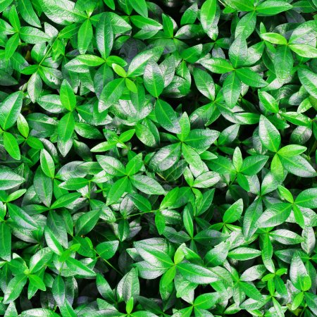 Photo for Green leaves of plant  very close up - Royalty Free Image