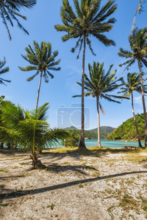 Palm trees on the island of Koh Ngam. Thailand.