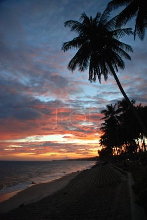 Tropical sunset, palms over sea, beach of Muine, Vietnam