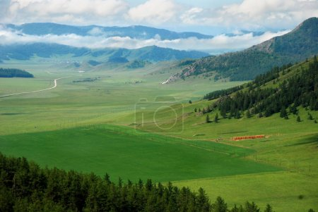 Lucerne field, valley, Altai, Russia