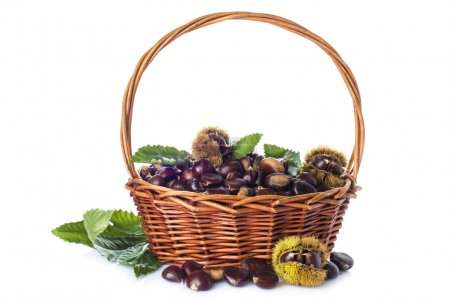 Basket with chestnuts isolated on a white background