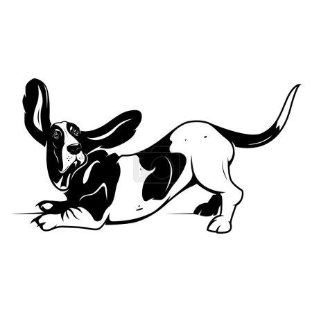 Cute Basset Hound