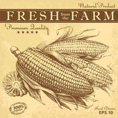 Hand drawn corn on vintage paper