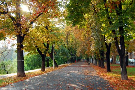 Photo for Colorful foliage in the autumn park - Royalty Free Image