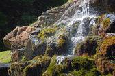 Bella cascata nella foresta