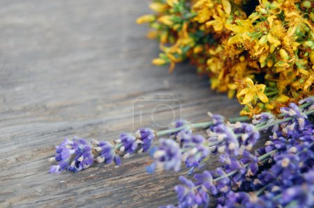 Photo for Background of lavender and St John's wort on wooden table. Tutsan - Royalty Free Image