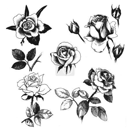 Photo pour Ensemble de roses dessinés à la main sur fond blanc - image libre de droit