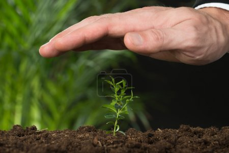 Hand Protecting Plant On Land