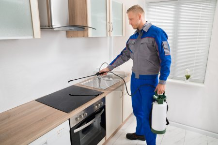 Worker Spraying Pesticide On Induction Hob
