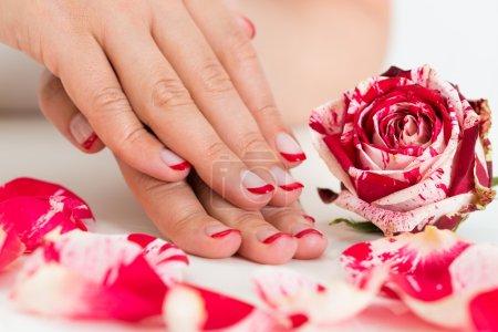 Photo pour Gros plan de belles mains féminines avec vernis à ongles rouge près de la Rose - image libre de droit