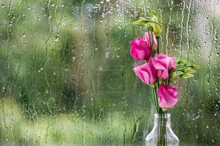 Foto de Eustoma flores contra el cristal de la ventana en día de lluvia. - Imagen libre de derechos