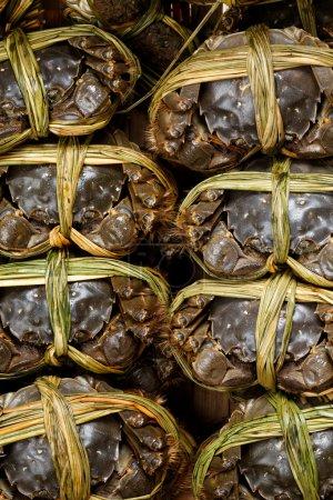 Photo pour Shanghai crabes poilus d'eau douce - image libre de droit