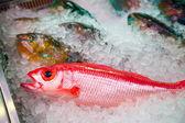 Frischer Fisch in nassen Markt