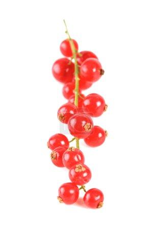 Fresh ripe redcurrats