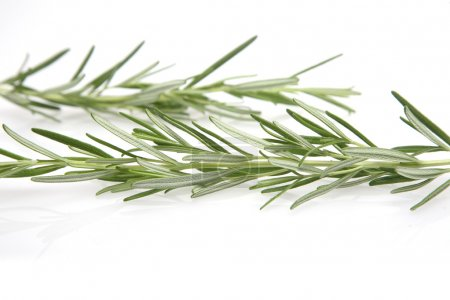 Photo for Studio shot of fresh green rosemary - Royalty Free Image