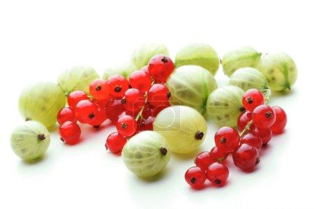 fresh Gooseberries and redcurrants