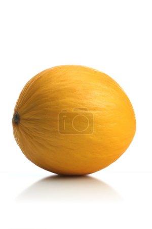Fresh sweet Melon