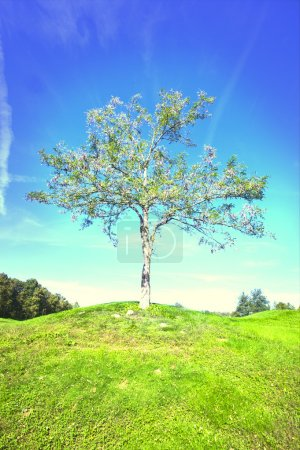 Photo for Lone blooming tree in field - Royalty Free Image
