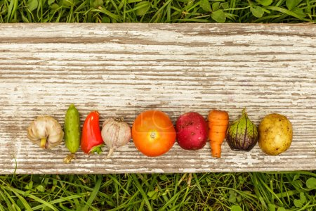 Photo for Vegetables laid out in a row with an empty space for text on a gray background of wooden planks - Royalty Free Image