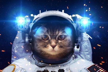 Photo pour Beau chat dans l'espace. Éléments de cette image fournie par la Nasa - image libre de droit