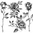 Hand drawn flower set, rose collection...