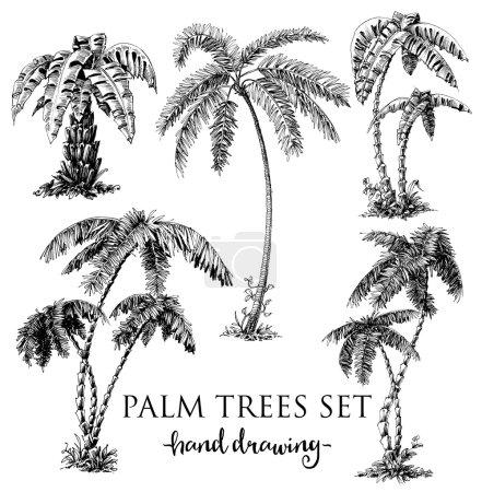 Detailed palm trees set