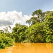 Amazon Jungle Yasuni National Park In Ecuador Sout...