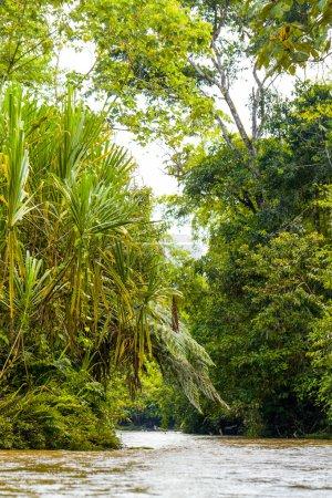 Photo pour La rivière Cuzutca en Équateur env. 30km Se de la ville de Puyo en Amazonie équatorienne - image libre de droit