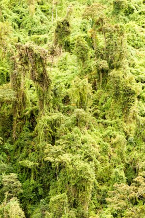 Rainforest Theme Vertical