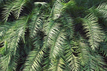 Photo for Green detailed tropical thicket backgroun - Royalty Free Image