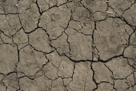 Photo for Dry cracked soil texture - Royalty Free Image