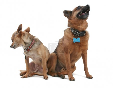 Two dogs sitting beside each other
