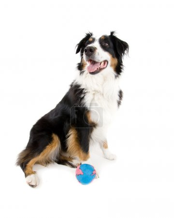 Dog in front of ball
