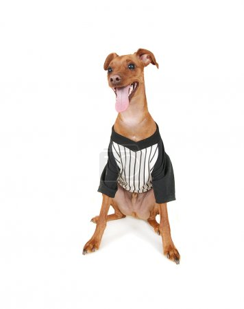 Dog with baseball jersey