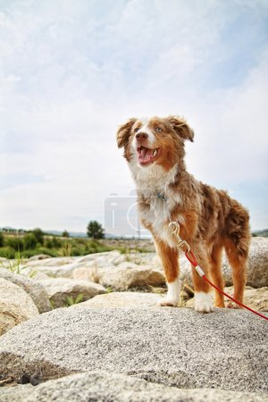 Cute dog on rocks