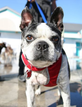 Dog at local pool