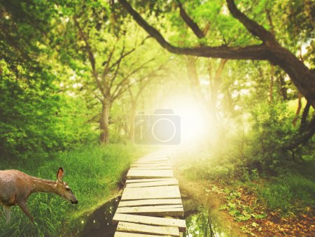 Bridge in green lush forest
