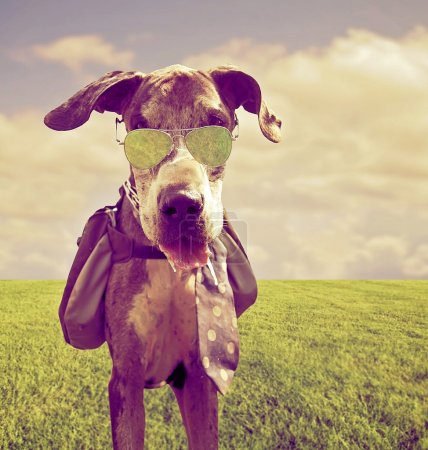 Great dane with backpack and sunglasses