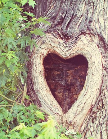 Tree with knothole shaped like heart