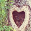 A tree with a knothole shaped like a heart done wi...