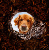 Dog looking down hole in ground