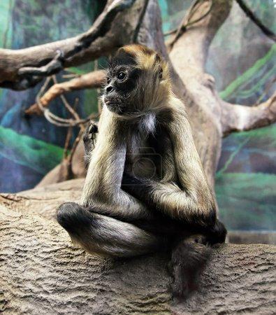 Cute monkey in zoo