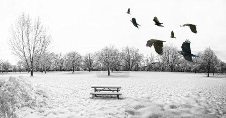 Photo pour Un paysage hivernal froid et pittoresque avec de la neige et des arbres et un troupeau d'oiseaux qui volent - image libre de droit