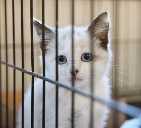 Kitten in an animal shelter